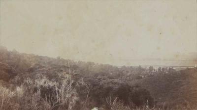 Photograph: Raukapuka Bush