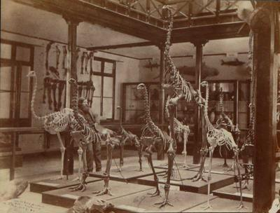 Photograph: Canterbury Museum