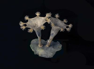 Glass Model Invertebrate: Lucernaria campanulata