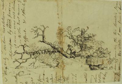 Sketch: Fallen Tree