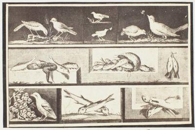 Photograph: Birds and Fish, Pompeii