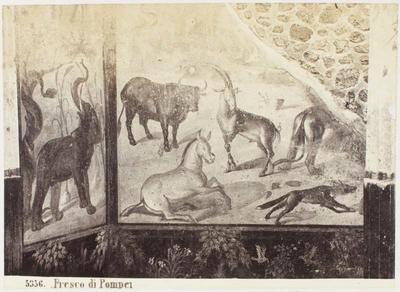 Photograph: Fresco di Pompeii, Animals