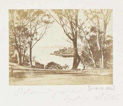 Photograph: Botanical Gardens, Sydney, New South Wales