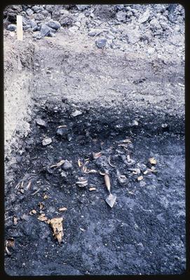 35mm Slide: Bones, Fyffe Site Archaeological Excavation (S49/46)