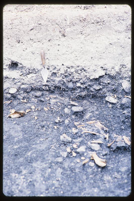 35mm Slide: Bone Accumulation, Fyffe Site Archaeological Excavation (S49/46)
