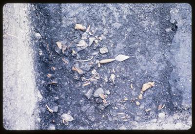 35mm Slide: Bird Bones, Fyffe Site Archaeological Excavation (S49/46)