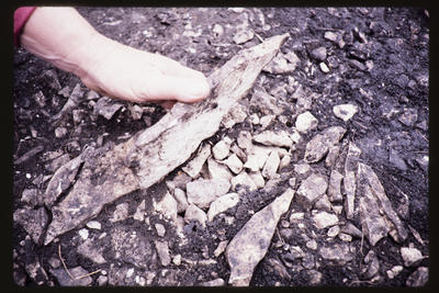 35mm Slide: Stone, Fyffe Site Archaeological Excavation (S49/46)