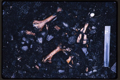 35mm Slide: Bones, Fyffe Site Archaeological Excavation (S49/46)