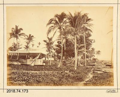 Photograph: Suva, Fiji