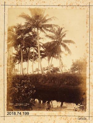 Photograph: Taviuni, Fiji