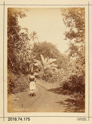 Photograph: Mango, Fiji