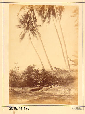 Photograph: Near Levuka, Fiji
