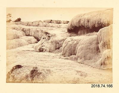 Photograph: Boar's Head, White Terrace