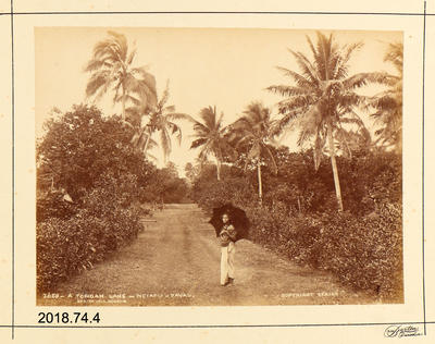 Photograph: A Tongan Lane - Neiafu - Vavau