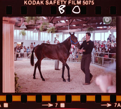 Negative: Man and Horse In Sales Yard