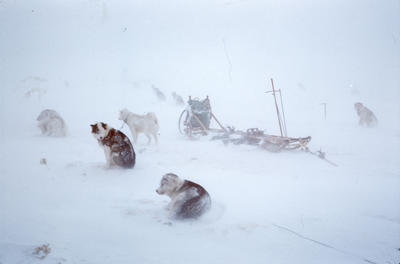 Slide: Huskies in Antarctica