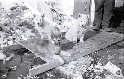 Negative: Puppies