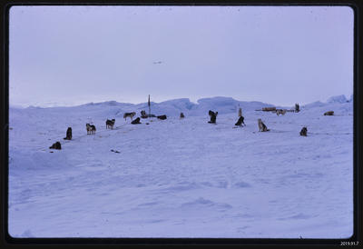 Slide: Dog Lines, Antarctica; 1968; 2019.91.7