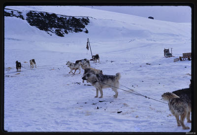Slide: Dog Teams, Antarctica; 1968; 2019.91.8