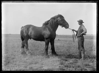"Glass Plate Negative: Mr Wilding and ""Jack"" the horse"