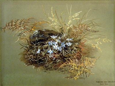 Painting: Herpolirion novazelandiae