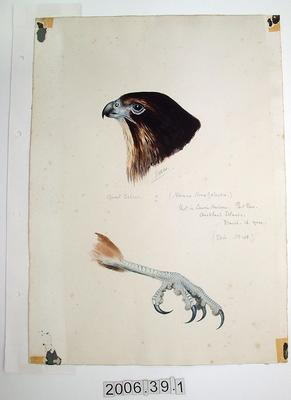 Painting: Quail Falcon