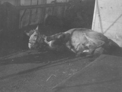 Photograph: Gulab on Deck