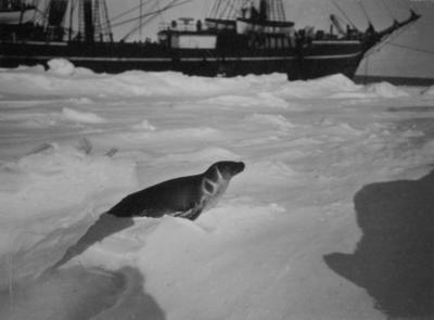 Photograph: Terra Nova and Crabeater