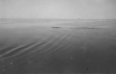 Photograph: Killer Whales