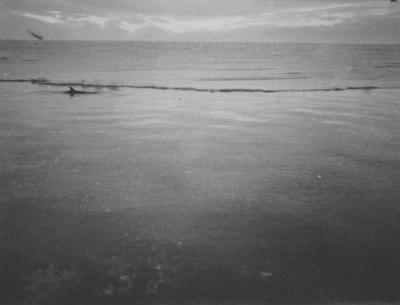 Photograph: Rostrala Whale