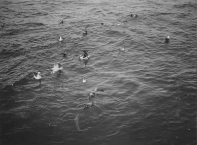 Photograph: Feeding Seabirds