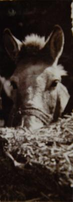 Photograph: Gulab Mule