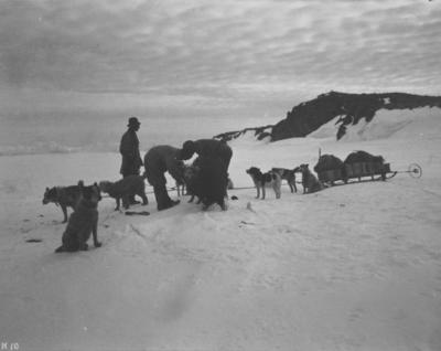 Photograph: Harnessing the Dog teams