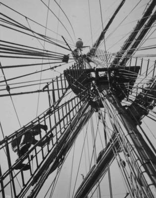 Photograph: Looking up at the Crows Nest