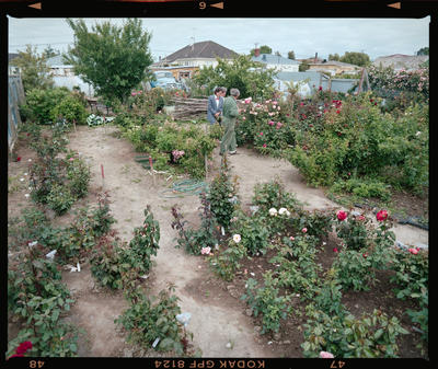 Negative: People In Rose Garden