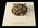 Glass Invertebrate Model: Serpula contortuplicata