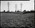 Film negative: W Williamson Contruction Company, stables at Riccarton