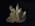 Glass Model Invertebrate: Clavellina lepadiformis