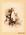 Photograph: The Australian Opposum [sic]