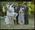 Negative: Black-White Wedding