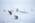 Slide: Huskies in Antarctica