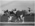 Photograph: Buckett's Gym Somersaults