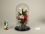 Flowers, Ornamental in Glass Dome