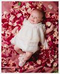 Negative: Baby Rose In Rose Petals