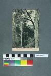 Postcard: Ngaruahoe