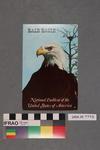 Postcard: Bald Eagle