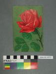 Postcard: Rose flower
