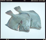 Negative: Ross Coeland Fisheries Two Fish