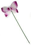 Tribute: Butterfly