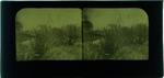 Glass Plate Positive Stereograph Slide: Avon River